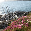Driftwood in context