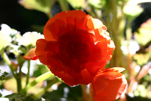 2007-07 Butchart Gardens