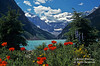Poppies, Lake Louise, Banff National Park, Alberta, Canada