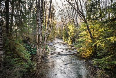 Baird Creek, Vancouver Island, British Colombia