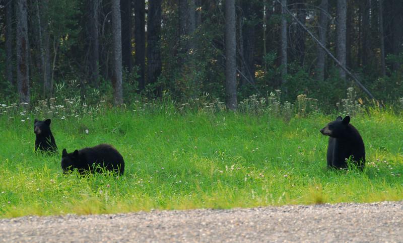 Alaska Hwy,  Whitehorse-Watson Lake,  Yukon