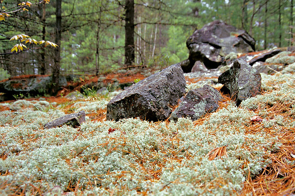 Moss in the Woods, Cottage Country