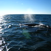 Saguenay in Canada : whalewatching