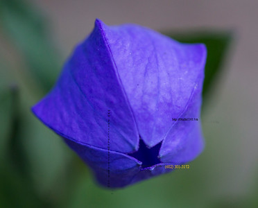 purple 5 sided flower 3183