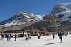 Glacier fields between Banff and Jasper