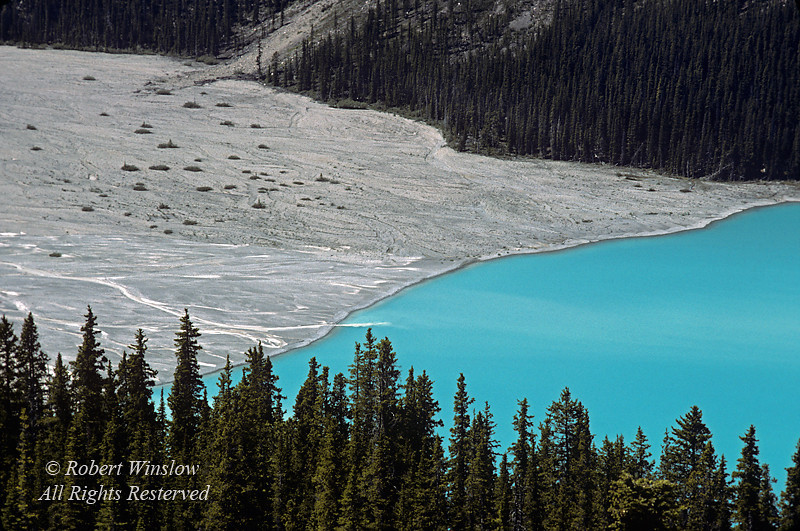 Glacier Fed, Peyto Lake, Banff National Park, Alberta, Canada<br /> During the summer, significant amounts of glacial rock flour flow into the lake, and these suspended rock particles give the lake a bright, turquoise color.  The lake is fed by the Peyto Creek, which drains water from the Caldron Lake and Peyto Glacier (part of the Wapta Icefield), and flows into the Mistaya River.