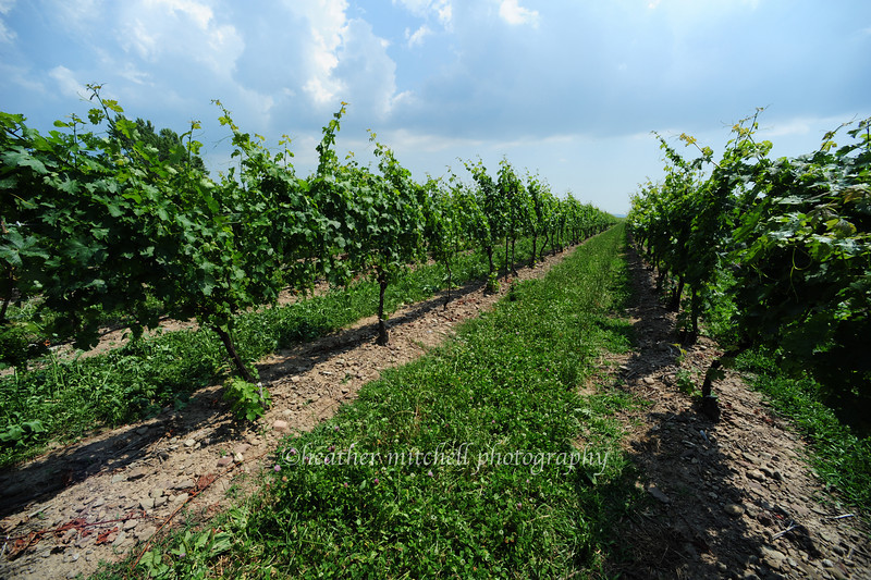 "Peller Estates Winery, Niagara-on-the-Lake, Ontario <form target=""paypal"" action=""https://www.paypal.com/cgi-bin/webscr"" method=""post""> <input type=""hidden"" name=""cmd"" value=""_s-xclick""> <input type=""hidden"" name=""hosted_button_id"" value=""MHRQHEBM23SWA""> <table> <tr><td><input type=""hidden"" name=""on0"" value=""Sizes"">Sizes</td></tr><tr><td><select name=""os0""> 	<option value=""Matted 5x7"">Matted 5x7 $20.00</option> 	<option value=""Matted 8x10"">Matted 8x10 $40.00</option> 	<option value=""Matted 11x14"">Matted 11x14 $50.00</option> </select> </td></tr> </table> <input type=""hidden"" name=""currency_code"" value=""USD""> <input type=""image"" src=""https://www.paypalobjects.com/en_US/i/btn/btn_cart_SM.gif"" border=""0"" name=""submit"" alt=""PayPal - The safer, easier way to pay online!""> <img alt="""" border=""0"" src=""https://www.paypalobjects.com/en_US/i/scr/pixel.gif"" width=""1"" height=""1""> </form>"