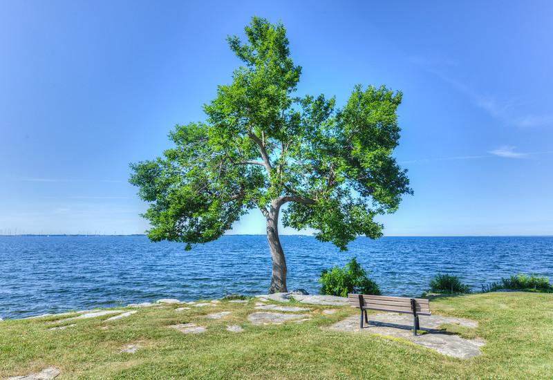 Tree and Bench in MacDonald Park, Kingston, Canada