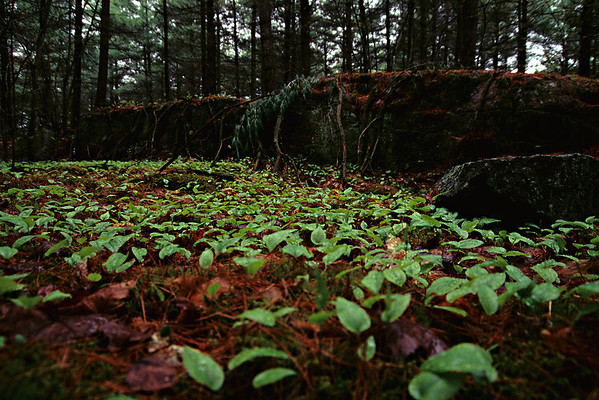 Forest Floor, Cottage Country