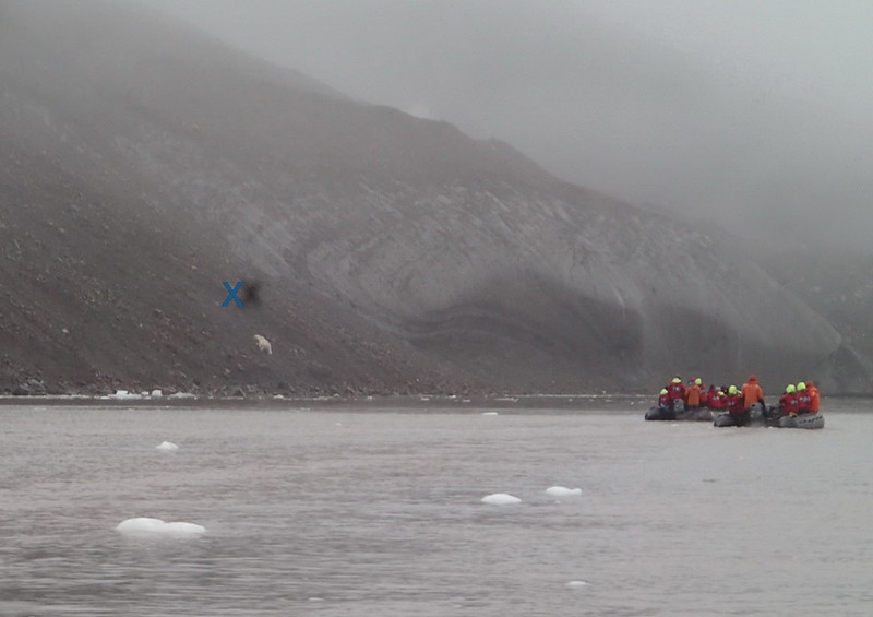 Some of the first boats out encountered three polar bears. This is not my picture, but you'll see one climbing just below the blue x. (Shipboard computers allowed passengers to share pictures).