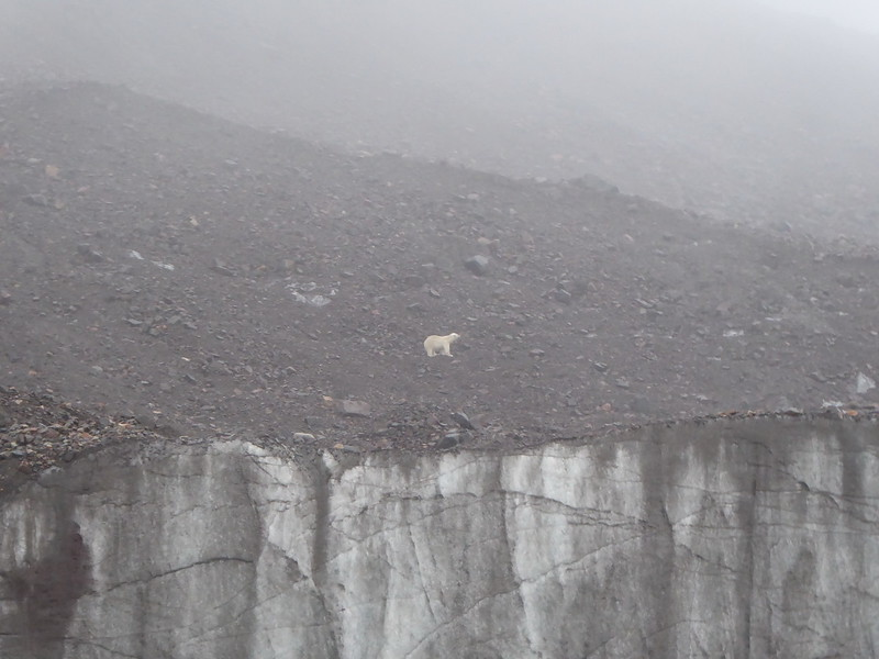 He moved quite quickly up and along the edge and onto the glacier. Needless to say, the presence of polar bears nixed any thoughts of kayaking here.