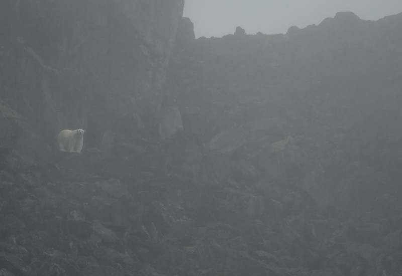 And a single polar bear.