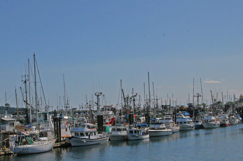 Cambell River has a active summer Harbor sports sailers and motor launches with a few fishers thrown in.