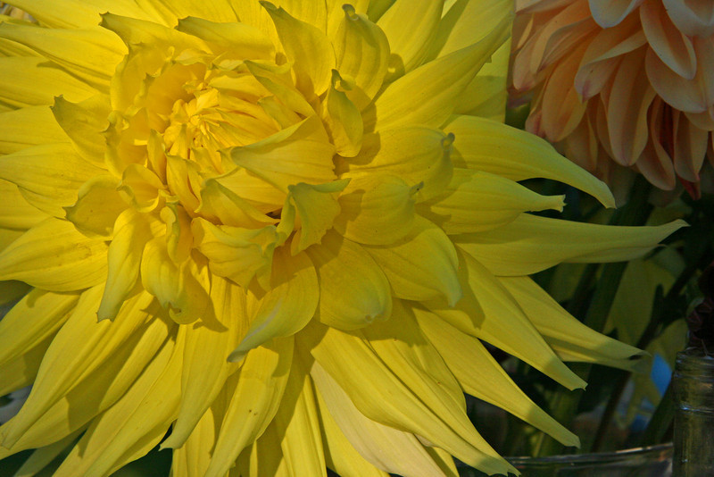 This Dalia was about 8 inches across.  Flowers and vegtables grow well in the warm damp climate.