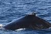 whales; marine life