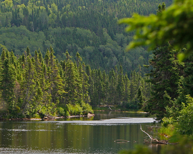 This is the quiet headwaters of Newman Sound a main estuary in Terra Nova National Park