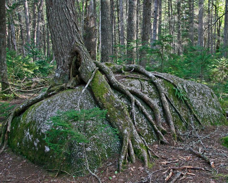 Tough tree