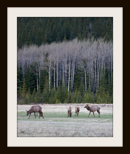 Canadian Rockies, a stroll in the meadow