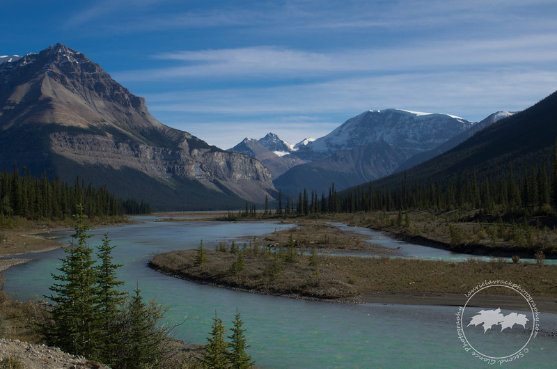 View from the Icefields Parkway, Jasper National Park