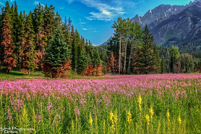 Meadow along Bow Parkway outside Banff