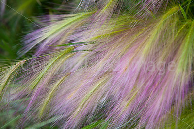Weeds blowing in the wind