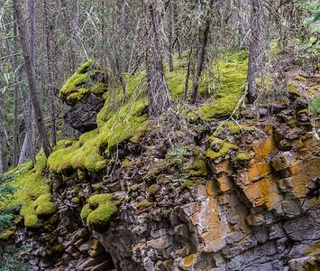Moss, Johnston Canyon