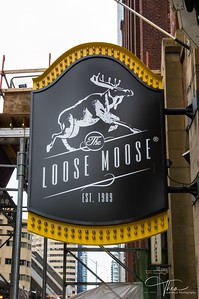 Loose Moose