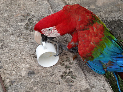 Day One at the camp... the bird wanted more coffee!