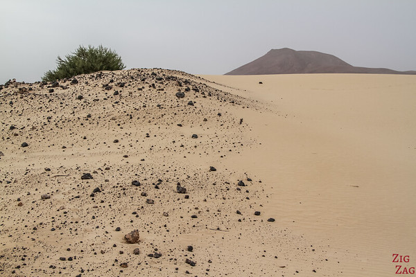 Sand dune tour of Fuerteventura from Lanzarote 2
