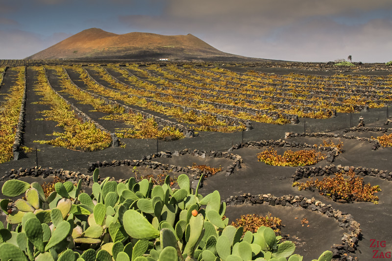 What to do in Lanzarote - El Golfo vineyards in autumn