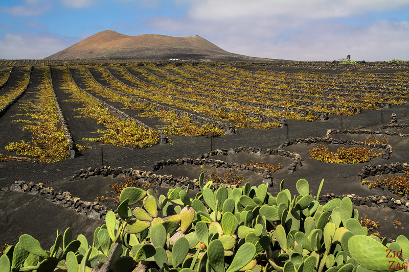 Lanzarote vineyards volcano photos