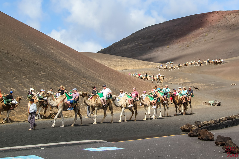 Timanfaya National Park Camel Ride