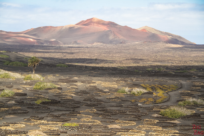 Lanzarote vineyards volcano photos 3