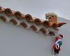Santa's surprise! Fuerteventura.