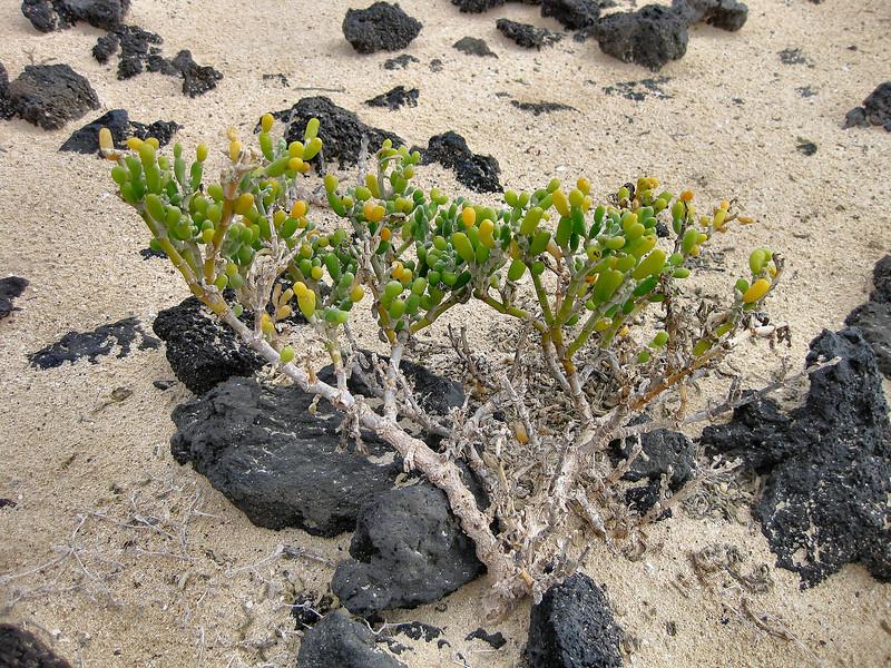 Beach near Corralejo, Fuerteventura.