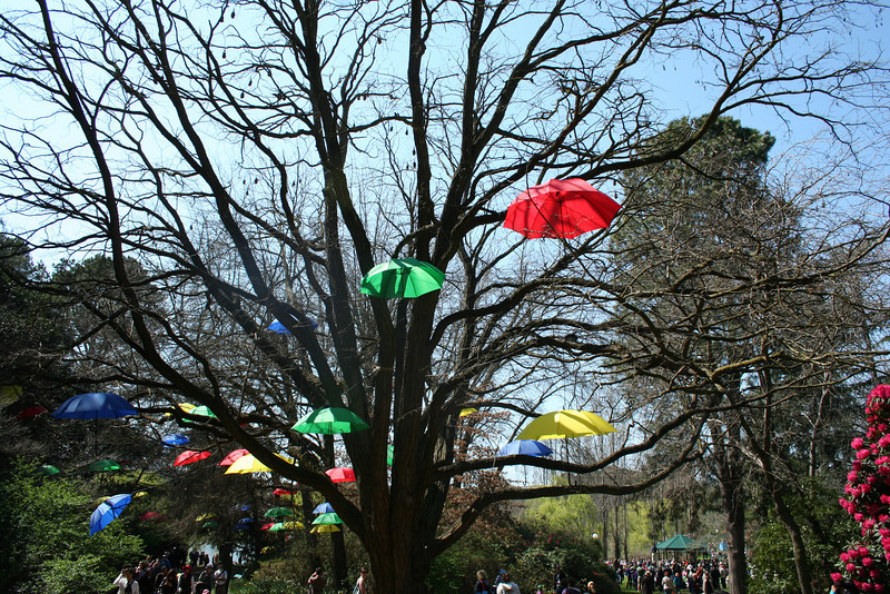 Umbrella Tree. Notice the bats in the branches.