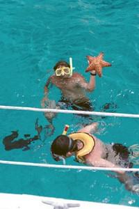 CozumelStarfish