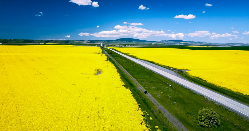 Canola From The Air