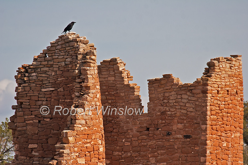 Raven on top of Hovenweep Castle, Hovenweep National Monument, Colorado, Utah, USA