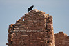 Raven cawing on Hovenweep Castle, Hovenweep National Monument, Colorado, Utah, USA