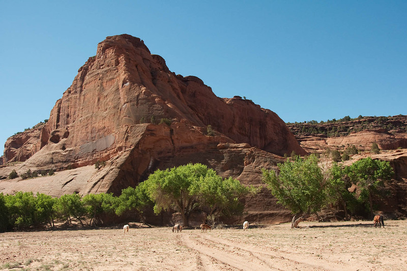 canyondechelly2011 (183)