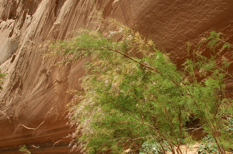 canyondechelly2011 (325)