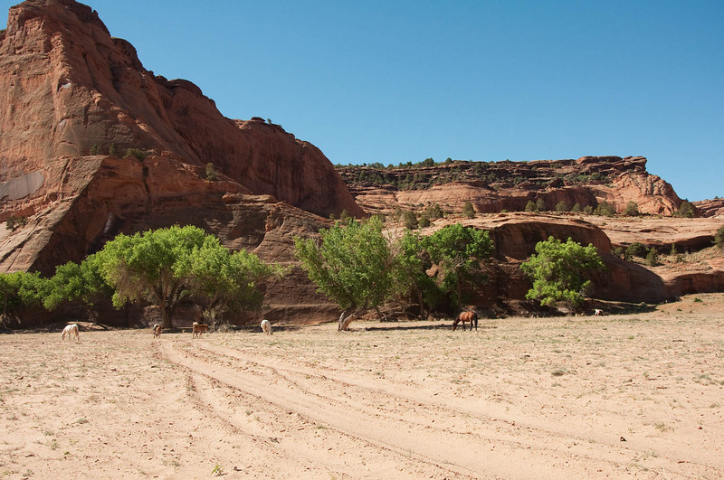 canyondechelly2011 (182)