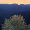 Arizona Vac Fri 003 Mod