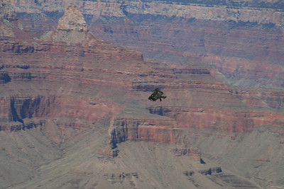 Condor over the canyon