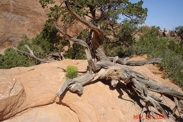 Canyon trip 2007