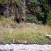 Blurry moose...very disappointed in myself over this one.