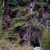 Blurry moose...