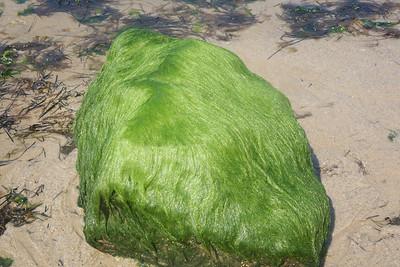 Hairy Rock