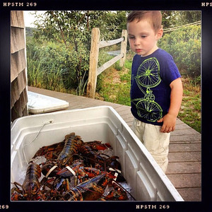 Eamon Checking the Lobsters